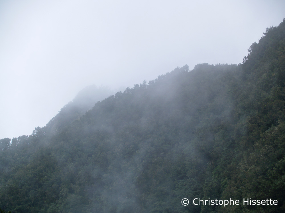 Fog on Monteverde La Gomera