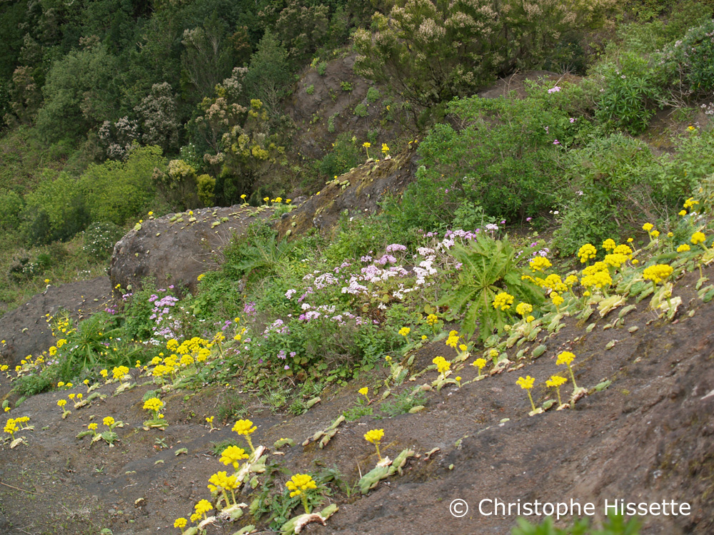 Fleurs La Gomera