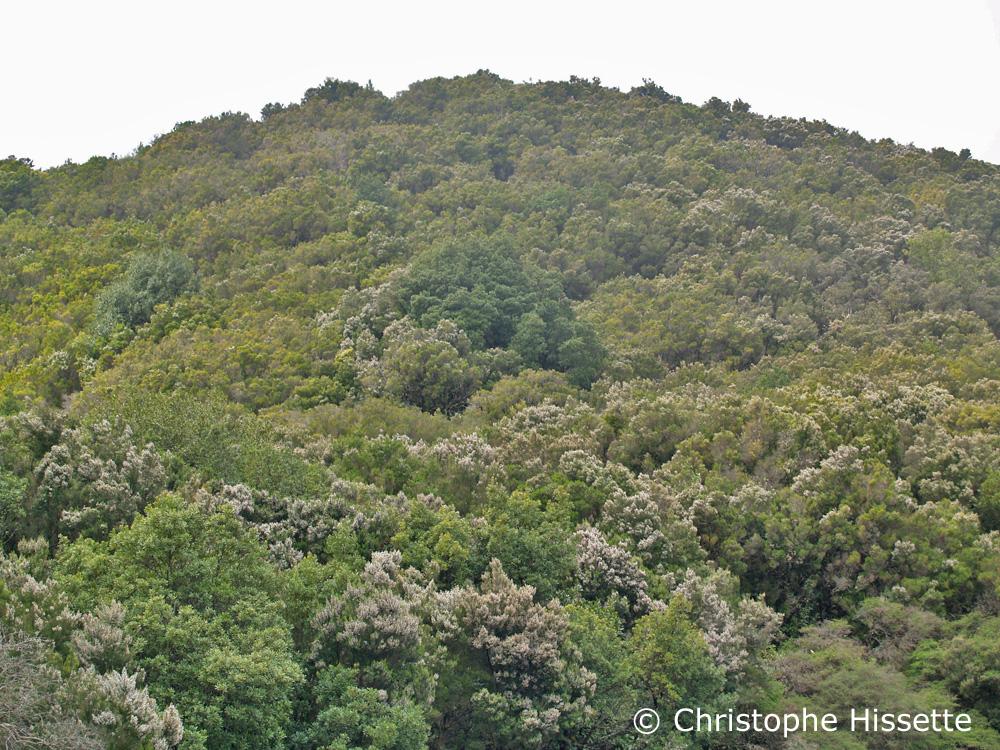 Monteverde La Gomera