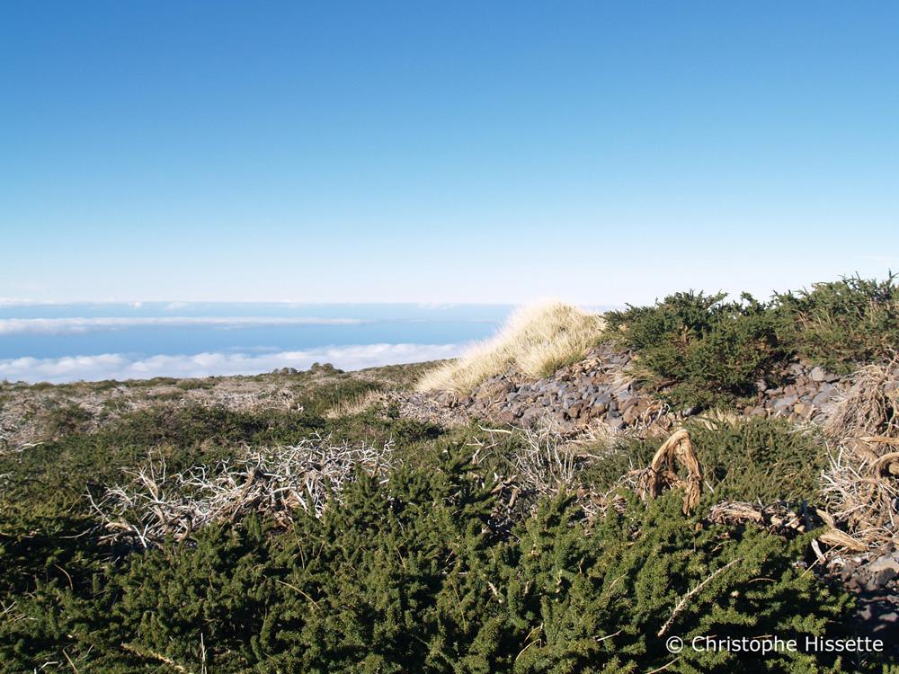 Adenocarpus Viscosus, Caldera de Taburiente National Park, La Palma