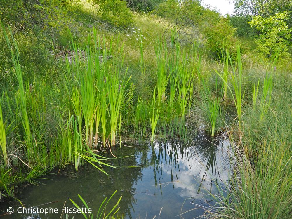 Réserve naturelle Haard, Hesselsbierg, Staebierg, Minett Unesco Biosphère, Luxembourg