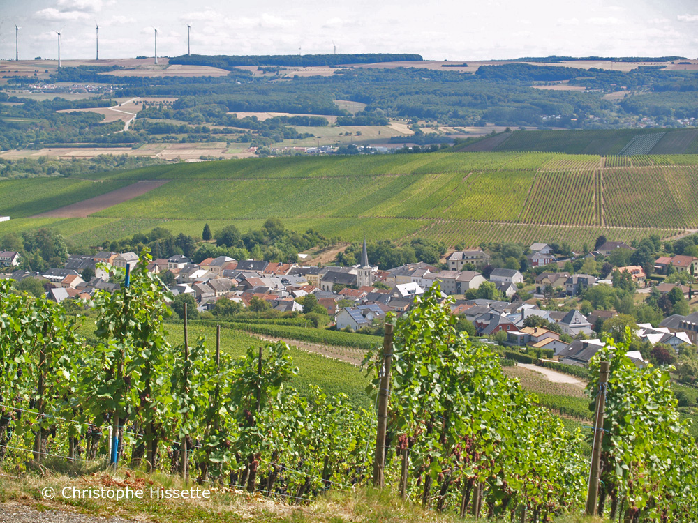 Wellenstein and its vineyard (Moselle), Luxembourg