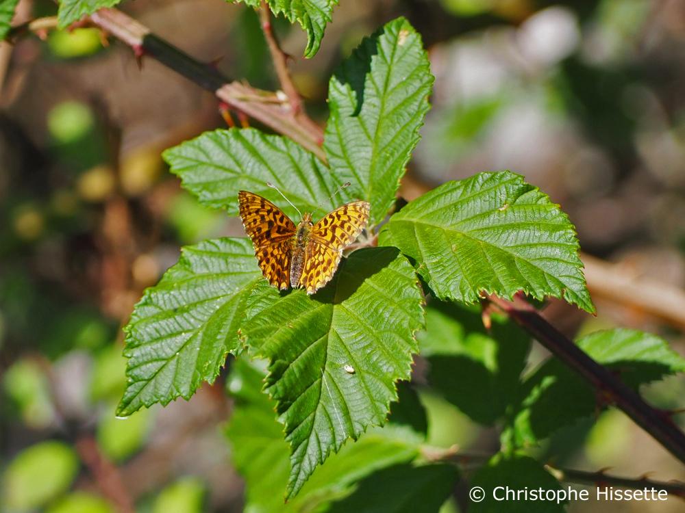 Papillon Tabac d'Espagne, Réserve Naturelle